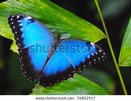 exotic butterfly on green leaf