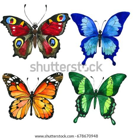 С бабочкой на лобке как зовут