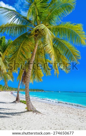 Exotic Caribbean beach with white sand and beautiful palm trees