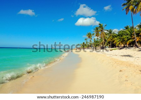 Exotic caribbean sandy beach with tall palm trees - stock photo