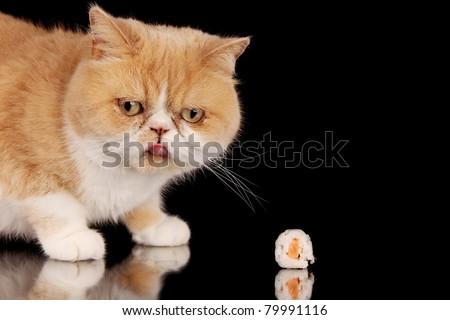Exotic cat eating piece of sushi, isolated on black background - stock photo
