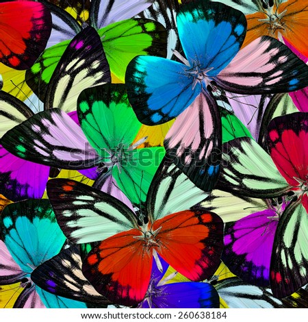 Exotic Colorful Background Texture made of Beautiful Orange Gull Butterflie's wing skin - stock photo