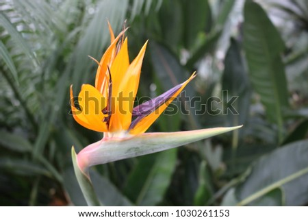 Exotic flower with a green background.