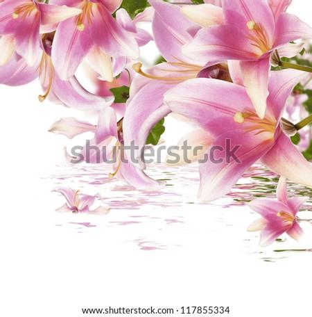 Exotic flowers.Flora background - stock photo