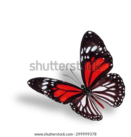 Exotic flying red butterfly on white background with soft shadow beneath - stock photo