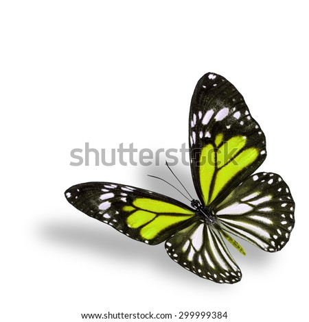 Exotic flying yellow butterfly on white background with soft shadow beneath - stock photo