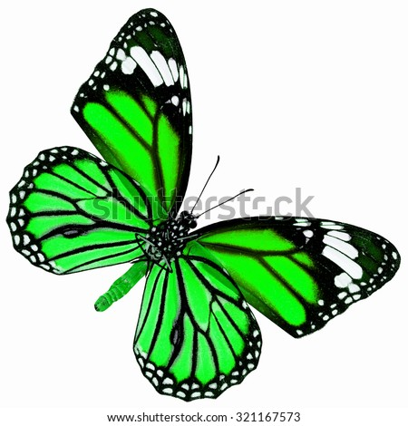 Exotic green butterfly with wing details and grain, the Common Tiger butterfly in fancy color profile isolated on white background