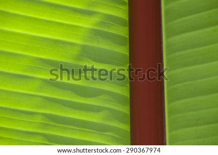 Exotic green leaf background - stock photo