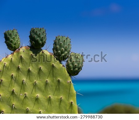 exotic green leaf with thorns - stock photo