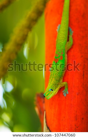 Exotic Green Tropical Lizard, Macro View Shallow Depth of Field