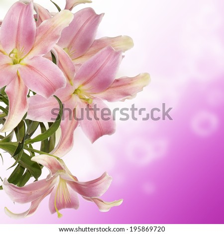 Exotic Japanese Lily.Floral background
