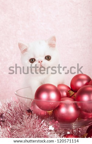 Exotic kitten with pink christmas decorations and tinsel on pink background
