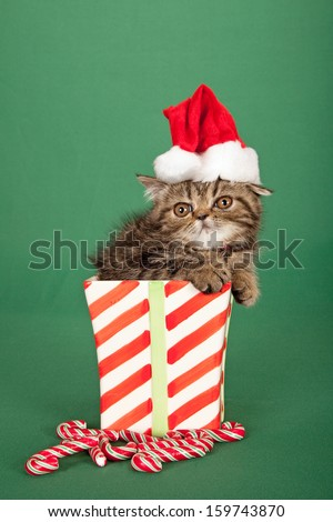 Exotic kitten with santa cap hat sitting inside Christmas theme bowl container with candy cane on green background - stock photo