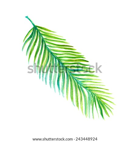 Exotic leaf. Tropical palm. Watercolor - stock photo