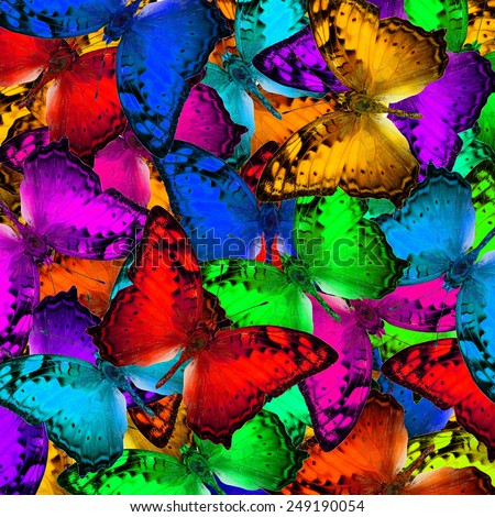 Exotic multicolor background texture made of Vagrant butterflies in various fancy colors profile - stock photo