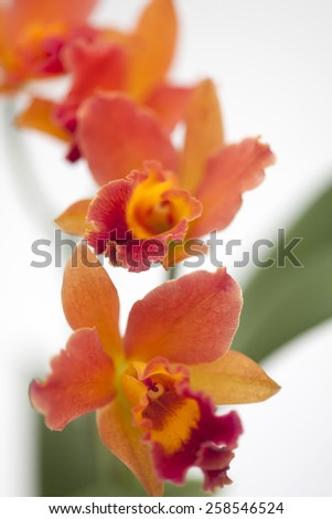 Exotic orchids - stock photo