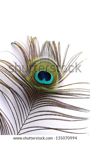 Exotic peacock feather on a white background - stock photo