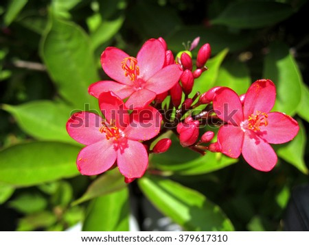 Exotic pink flower blooming on the branch of bush