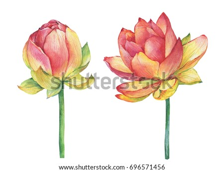 Exotic pink flowers egyptian lotus symbol stock illustration exotic pink flowers egyptian lotus symbol of india water lily watercolor hand drawn mightylinksfo