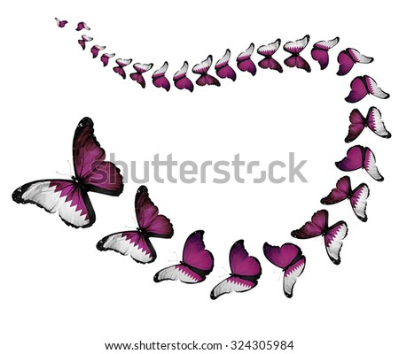 Exotic Qatar flag butterflies flying on white background as symbol freedom - stock photo