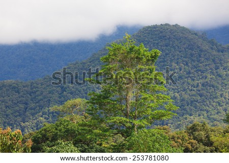 Exotic rainforest landscape - stock photo