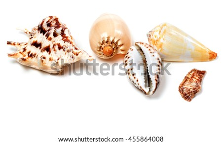 Exotic seashells isolated on white background with copy space - stock photo