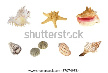 Exotic Seashells Isolated on White, Conch, Cone, Bonnet, Triton, urchin, Sea Star, Murex - stock photo