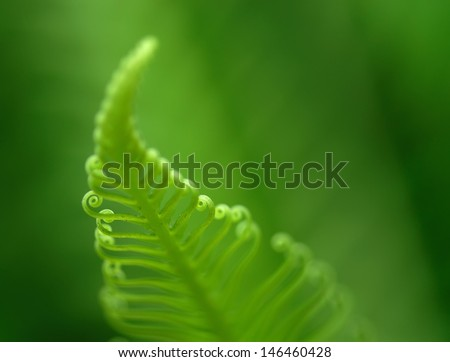 Exotic tropical ferns with shallow depth of field (dof)