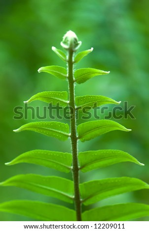 Exotic tropical ferns with shallow depth of field (dof) in Malaysia.