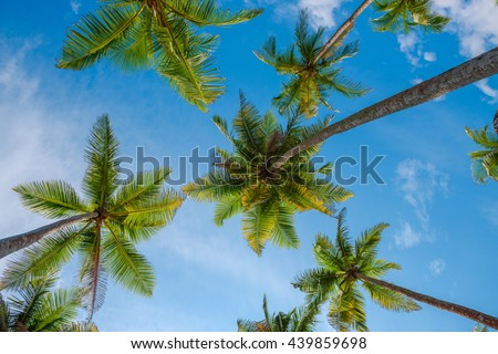 Exotic tropical palm trees at summer, view from bottom up to the sky at sunny day - stock photo