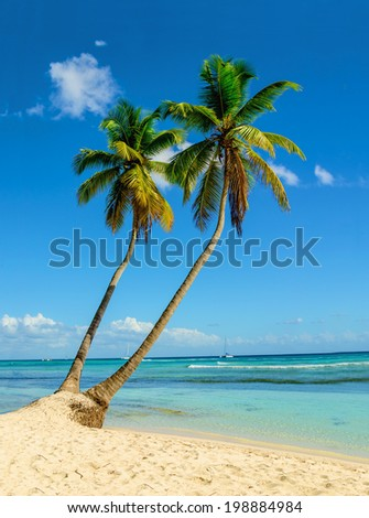 Exotic view of sandy beach with palm trees entering the ocean against blue sky - stock photo