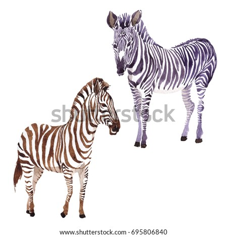 Exotic zebra wild animal in a watercolor style isolated. Full name of the animal: zebra. Aquarelle wild animal for background, texture, wrapper pattern or tattoo.