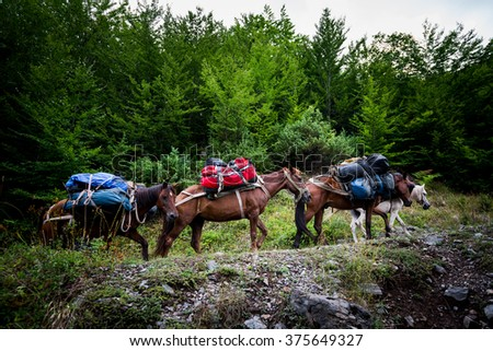 expedition into the mountains with horses and luggage