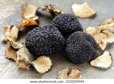 expensive rare black truffle mushroom - gourmet vegetable - stock photo