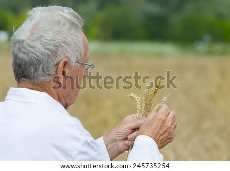Experienced agronomist in white coat examining wheat grains in field - stock photo