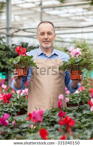 Experienced old gardener is working at greenhouse. He is standing and holding two plants. The man is looking at camera and smiling - stock photo