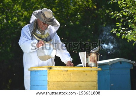 Experienced senior beekeeper pouring syrup into a feeder in apiary before winter season