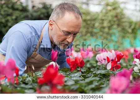 Experienced senior garden worker is standing at greenhouse. He is smelling flower with enjoyment. His eyes are closed  - stock photo