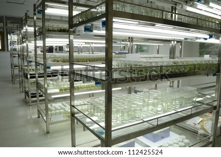 experiment of plant tissue culture in the laboratory - stock photo
