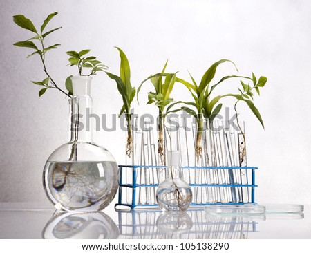 Experimenting with flora in laboratory - stock photo