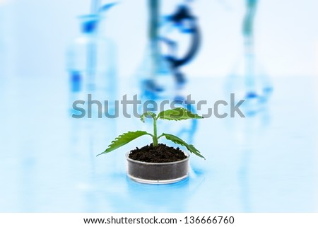 Experimenting with flora in laboratory.Seedlings in  laboratory. - stock photo