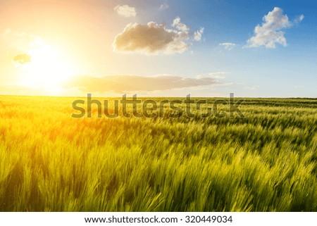 Explosive sunlight shines over a cornfield - stock photo