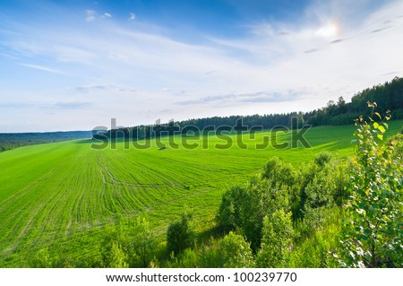 Extended sunny green field under crop with sower tracks against forest background