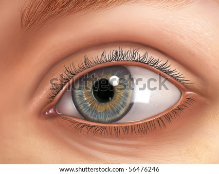 External view of an healthy human eye. Digital illustration. - stock photo