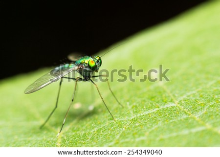 extra soft focus green insect macro on green leaf - stock photo