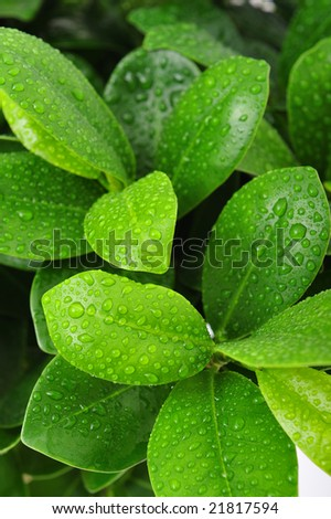 Extreme close up of green leaf with drops