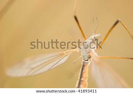 extreme close up of mosquito - stock photo