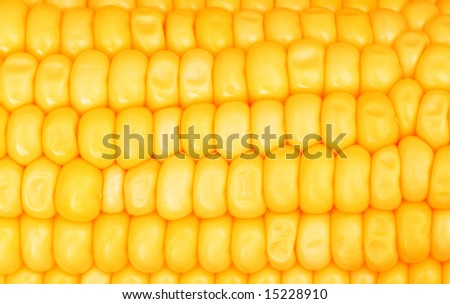 Extreme close up of yellowe corn cobs