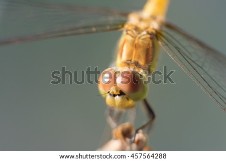 Extreme close-up view of a dragonfly sitting on a dry flower (with shallow depth of field)