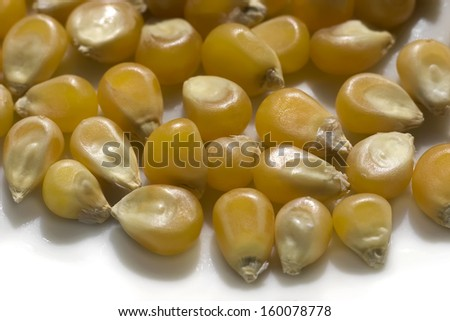 Extreme close-up view of corn grains over white.